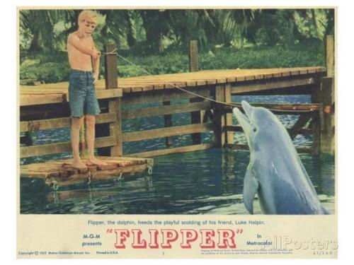 FLIPPER LOBBY CARD 1