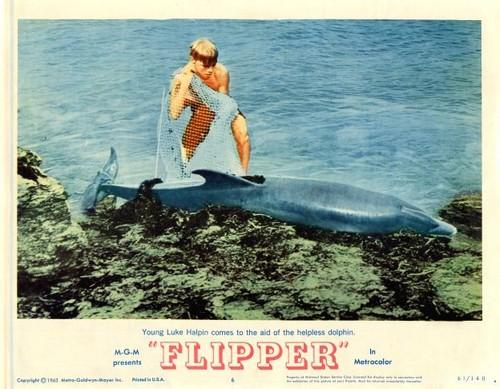 FLIPPER LOBBY CARD 2